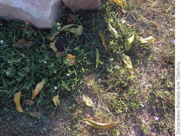 опадают листья