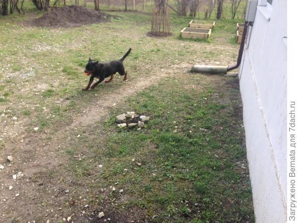 Благодаря собаке мы узнали пути наименьшего сопротивления кратчайшие отрезки от точки X до точки Y, которые проходят строго по одним и тем же маршрутам вокруг дома, на расстоянии одного метра от стены  и вдоль забора, на расстоянии 30 см.