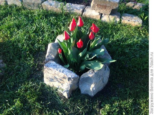 Помимо приствольных кругов-клумб, появились и каменные чаши, ограждающие цветы на газоне.