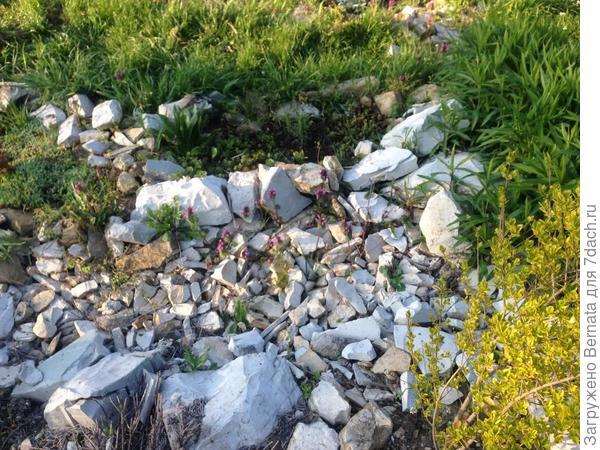 по сути, это уже не сухой ручей, а каменистый садик, в котором камни защищают и оберегают растения…