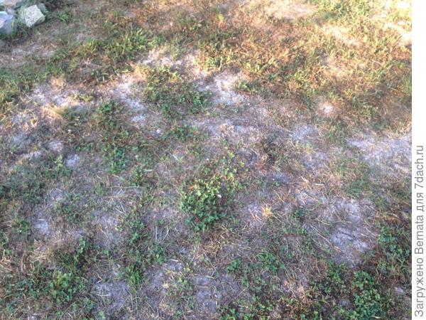 Проплешины и трещины на газоне