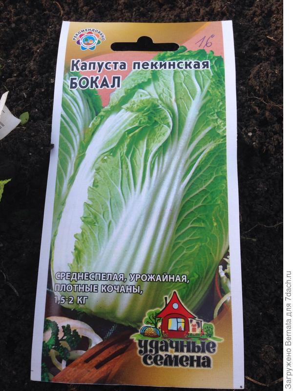 И посадила капусту. Тоже:))))