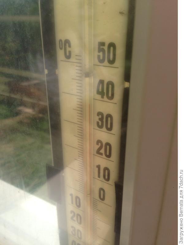 На солнце под 40, в тени под 30. Здравствуй, лето:))