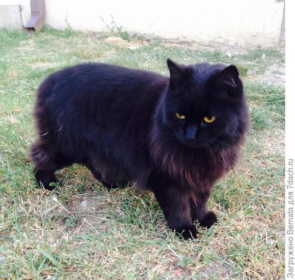 Жил-был кот Йохан. Жил счастливо и ...одиноко=), целых десять лет.