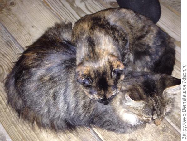 Йохан, периодически, на них ворчит и учит жизни... Федька еще и от соседского кота иногда отхватывает.., но в остальном, жизнь прекрасна и удивительна...  Ну а в мире...на двух бездомных котят стало меньше =))