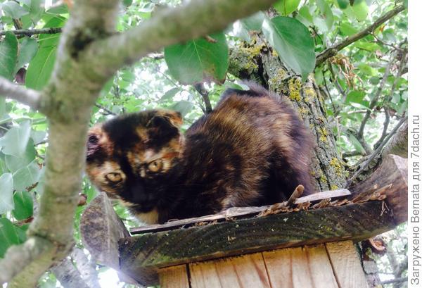 Сначала определила девочку жить в теплицу, всё надеялась, что заберут, потом увидела, что она прячется от взрослых котов на высоких деревьях, спускается только если я во дворе..,