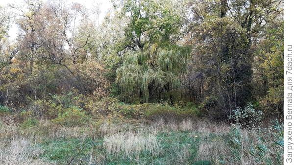 """Конечно, есть уже и жёлтые листья, и красные... Я их покажу... Но, в целом, наша осень ещё молодая барышня, которая только-только начала """"зреть""""..."""