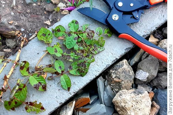 Я сама себе садовник, или Что делать, когда уже поздно что-либо делать?
