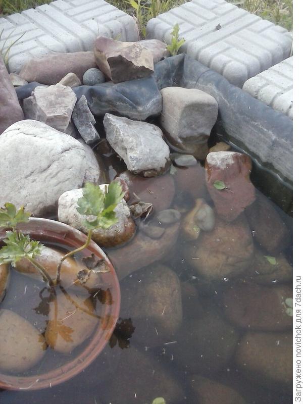 лягушка под камнем
