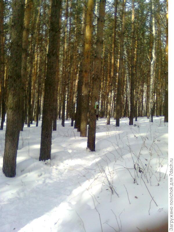 лес в городской черте