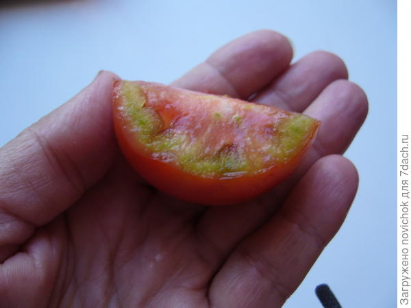 что с помидоркой?