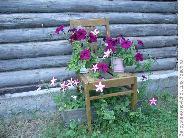 С этих цветов были собраны семена
