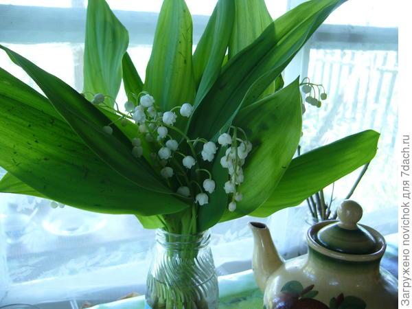 ландыш майский сейчас цветет