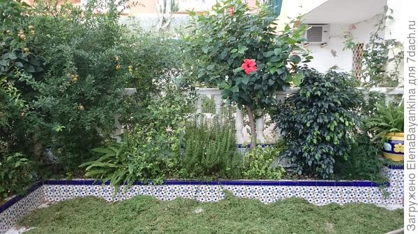 Трава  для растений нужна, что в Подмосковье, что в Испании.