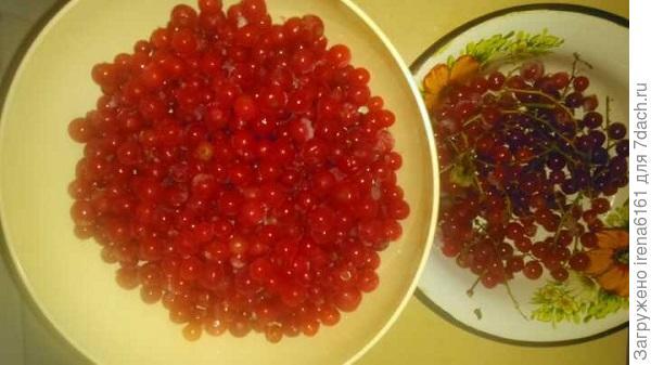 Перебираем ягоды, осторожно отделяя ее от веточек
