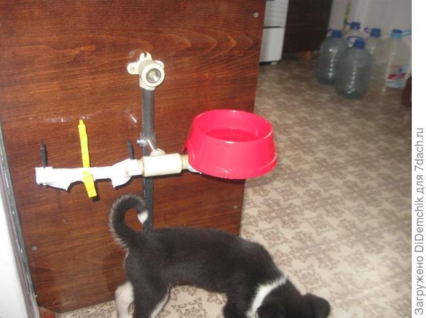 Тарелка - миска для собачки на стене