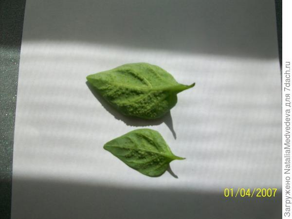 листья перцев