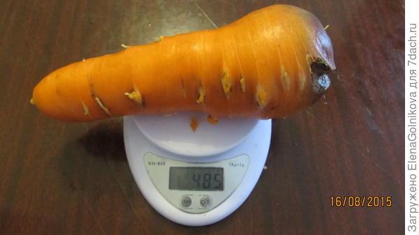 Морковь Белочка