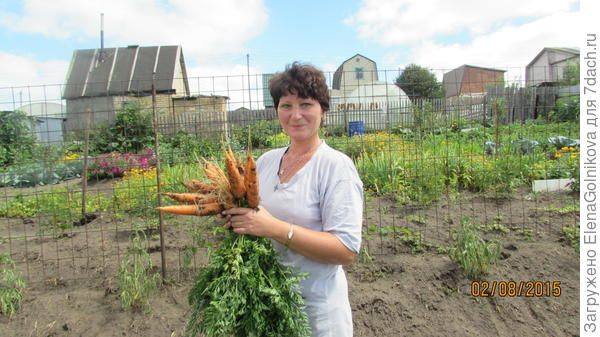 да здравствует морковь!