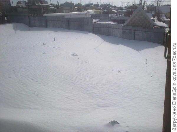 ежевика под снегом