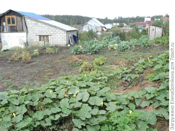 расчищенный и облагороженный будущий сад