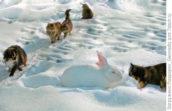 Кошки и кролики ждут внуков зимой.