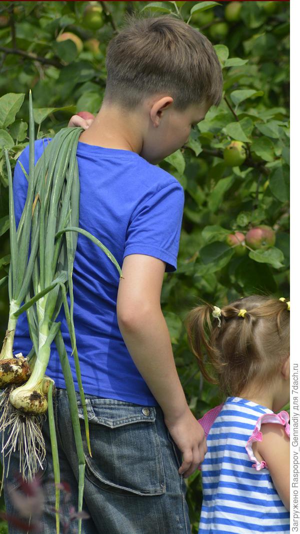 дети и урожай