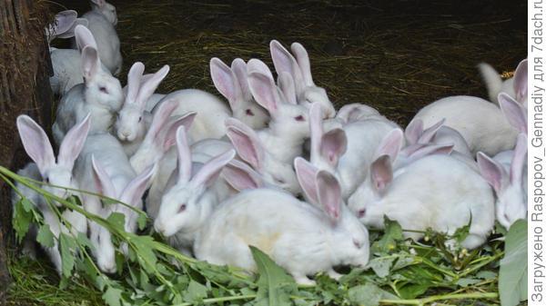 мои кролики