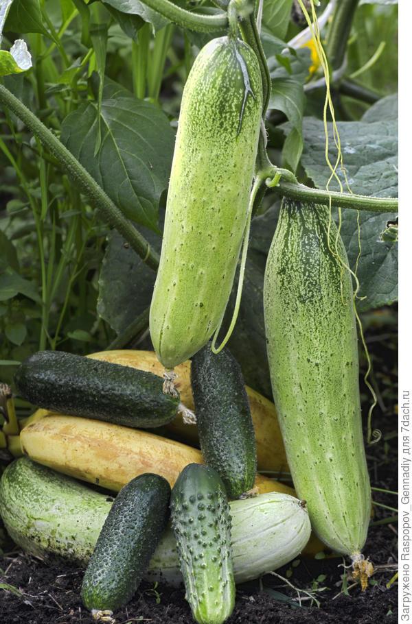 урожай на компосте