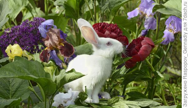 портрет крольчонка