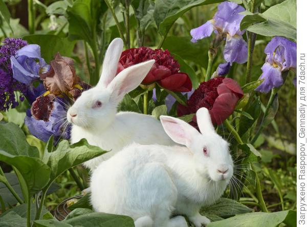 крольчата в саду