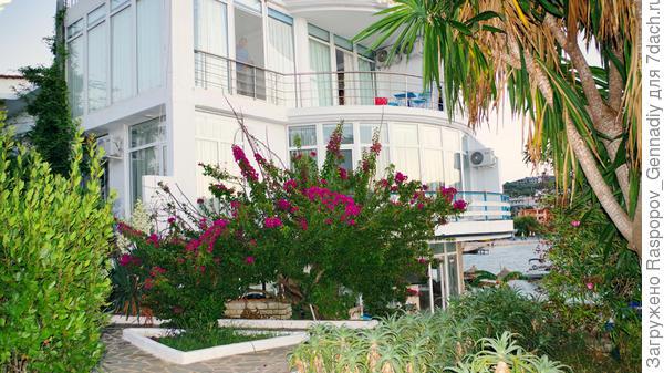 Утром на острове можно любоваться растениями