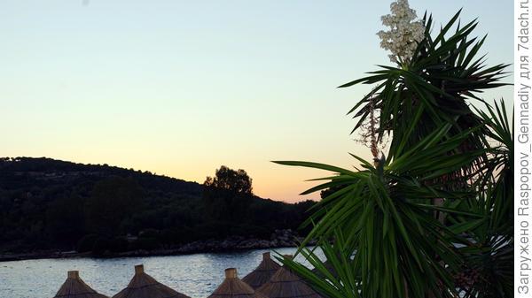 Справа пальмы и закат