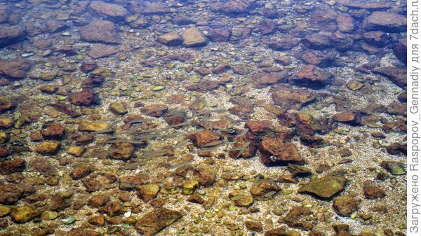 и в трех метрах чистейшее прозрачное море с рыбками