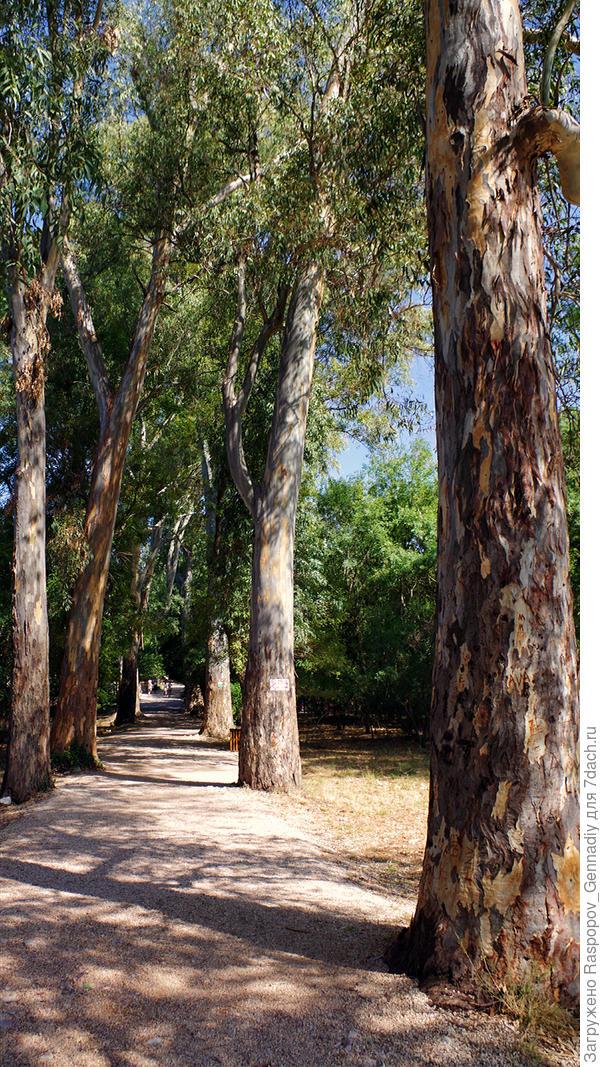 Этой аллее и деревьям много сотен лет