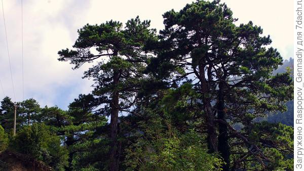 Могучий лес в горах субтропиков
