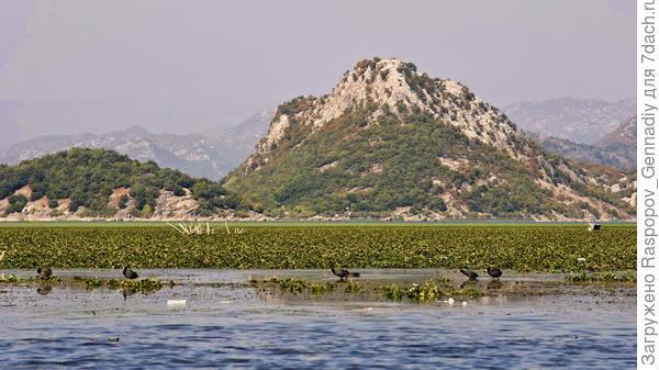 Вот такое оно Скадарское озеро