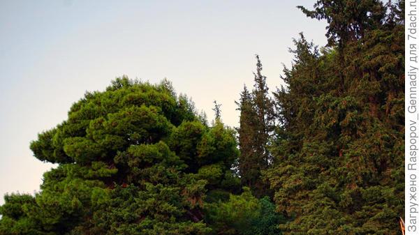 Вид из окон налево - лес