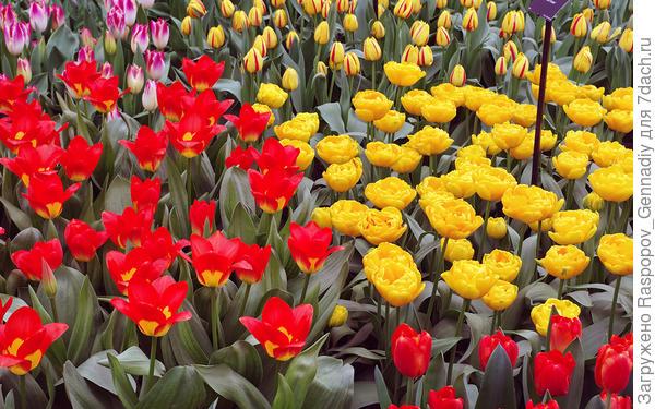 желтое на красном