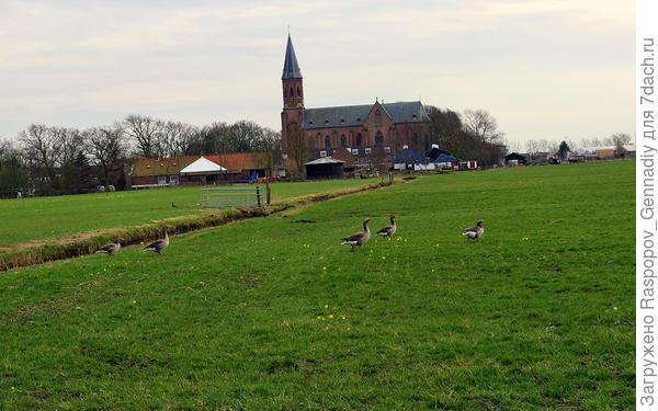 Направо поля с дикими гусями