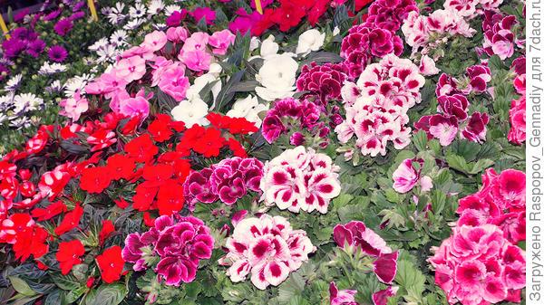 Немыслимые расцветки