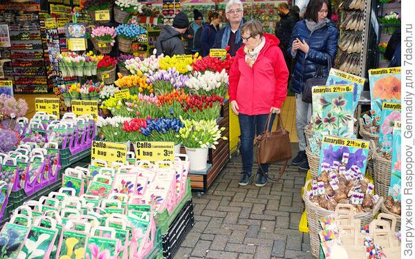 Везде продают луковицы