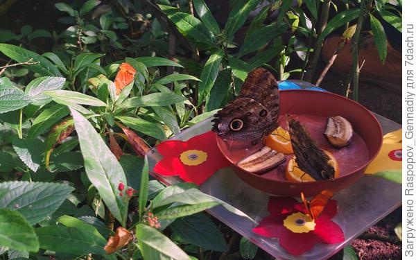Шикарная коллекция бабочек