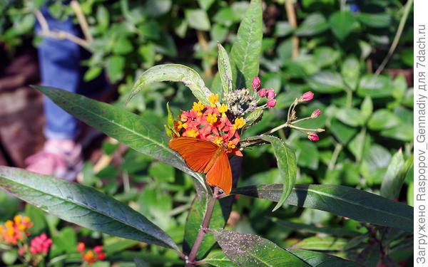 Сотни живых бабочек и много детей