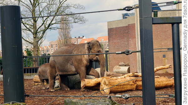 Трудолюбивые слоны