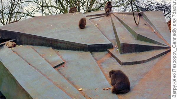 Крикливые обезьяны