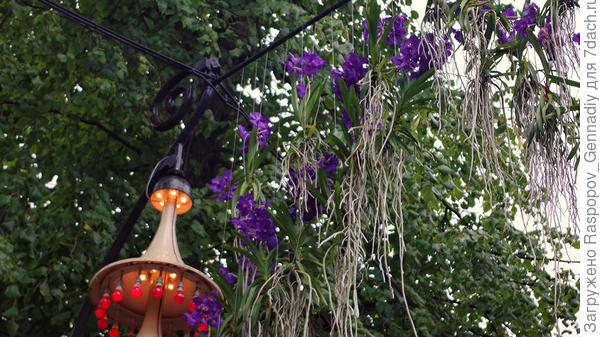 Живые дикие орхидеи