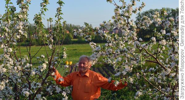 Я в своем райском саду , яблонь более тысячи прививок. На заднем фоне наш поселок.