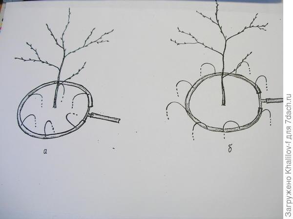 Схема полива по кругу