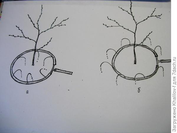 (Схема-рисунок) Поливаем внутрь круга, потом поворачиваем  и полуваем наружу круга